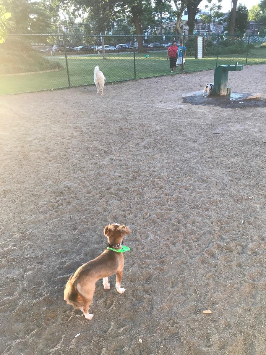 dog park 2 july 2018